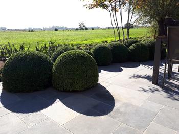 TuinOntwerpBureau De Keyser - Realisaties - Landschapstuin met weidse zichten - Boekhoute
