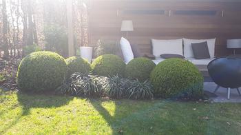 TuinOntwerpBureau De Keyser - Realisaties -Moderne tuin met zwembad - Knesselare